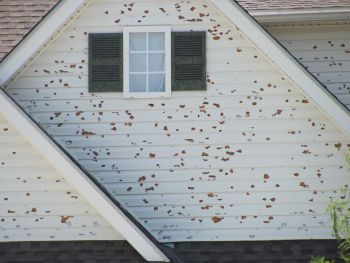 Was your Minneapolis area home damaged by hail?